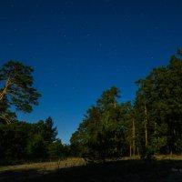 Большая медведица в свете Луны. :: Олег Помогайбин