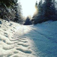 Зимний лес :: Ruslan