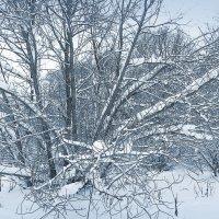 Деревья в серебре :: Наталья Лакомова