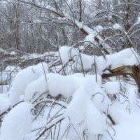 Лесные завалы :: Наталья Лакомова