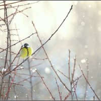 А снег идет... :: Ольга Кирсанова
