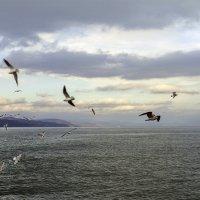 Крыльями сшивают облака... :: Валерий Басыров
