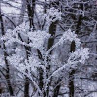 зима сезон 2018-2019. :: александр мак mak