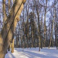 в парке :: Петр Беляков