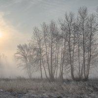 Утро. :: Евгений Герасименко