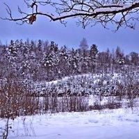 Дышим лесным воздухом! :: Vladimir Semenchukov