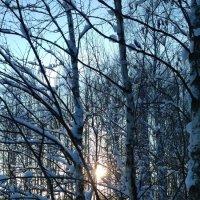 Русская зима :: OlegVS S