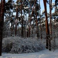 И я затаилась, почти не дыша... Ах, зимняя сказка, как ты хороша! :: Ольга Русанова (olg-rusanowa2010)