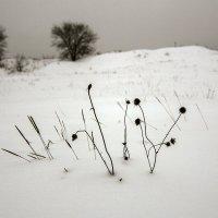 снега :: Геннадий Свистов