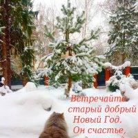С наступающим старым Новым Годом!!! :: Тамара (st.tamara)