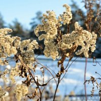 Зимние цветы :: Милешкин Владимир Алексеевич