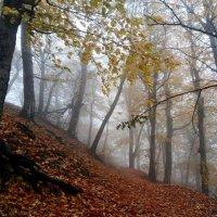 Кавказская осень....... :: Юрий Цыплятников