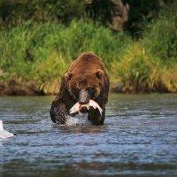 Удачная рыбалка Горбатого :: Геннадий Мельников