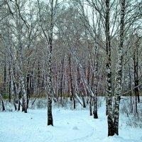 Березовый лесок :: Raduzka (Надежда Веркина)