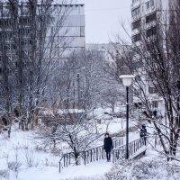 Зима 2019 :: Владимир Кроливец