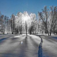 зимнее солнце :: Николай Мальцев