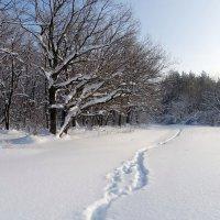 По снежной целине шагая.. :: Андрей Заломленков
