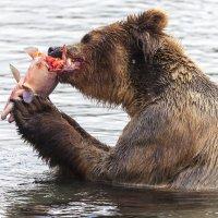 Мамаша ест, чтобы было молоко :: Геннадий Мельников