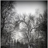 Александровский парк :: Вера