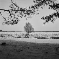 Дерево в рамке... :: Сергей