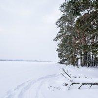 Лес :: Евгений Шанцев