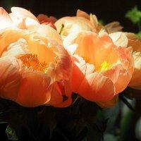 сказочные цветы :: Олег Лукьянов