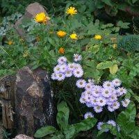 Осенние цветы - ромашка :: Маргарита Батырева