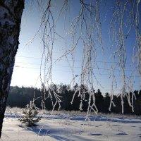 Мороз и солнце ! :: Сергей