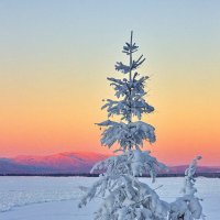 Снежком укутана :: Геннадий Лосев