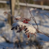 Зтюд про первый снег :: Kventin Natabos