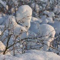 Морозно :: Женя Лузгин