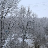 Деревья в снегу :: Николай Холопов