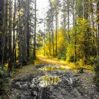 осений лес :: Сергей Кочнев