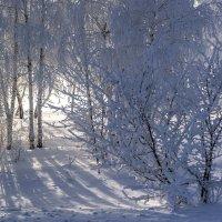 Снежность.. :: Регина Волгина