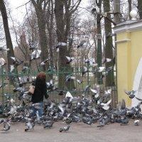 Голуби Таврического сада :: Наталья Герасимова