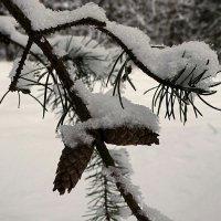 Картинка зимы :: Милешкин Владимир Алексеевич