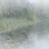 Осенние туманы :: Nikolay Monahov