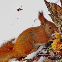 Вкусные зимние опята. :: vodonos241
