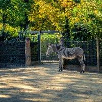 Франкфуртский зоопарк :: Олег Зак