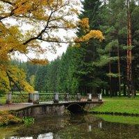 мостик между желтым и зеленым :: Лариса Крышталь