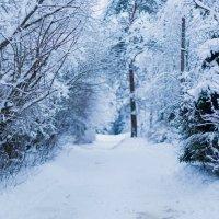 Зима пришла :: Анастасия Володина