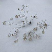 Зима :: Светлана Ященко