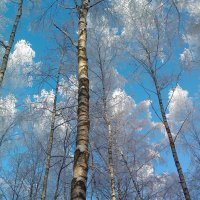 Зимний пейзаж :: Виктор R