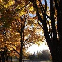 Когда осень была золотая... :: Анна VL