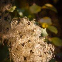 Осень наступила , отцвели цветы... :: Андрей Нибылица
