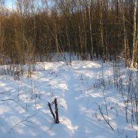 Зимний полдник в лесу :: Владислав Плюснин