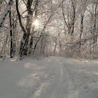 А у нас в  январе  много снега на дворе! :: Андрей Заломленков