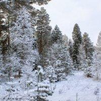 зимний пейзаж :: Владимир