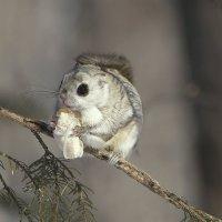 Случайная встреча в зимнем лесу :: Татьяна Башкирова