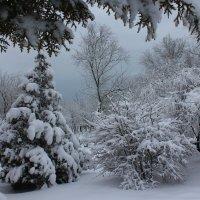 Зимний день :: оксана косатенко